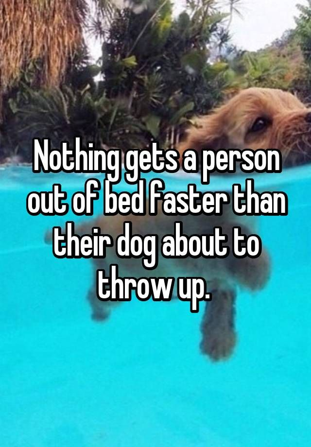 """""""Nothing gets a person out of bed faster than their dog about to throw up. """""""