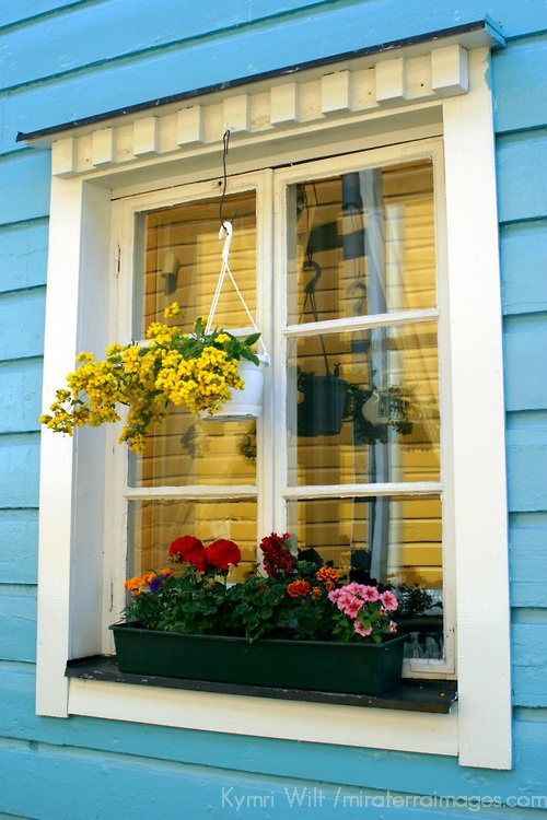 Europe, Scandinavia, Finland, Porvoo. Flowers populate windows and windowsills in homes of Porvoo, Finland.