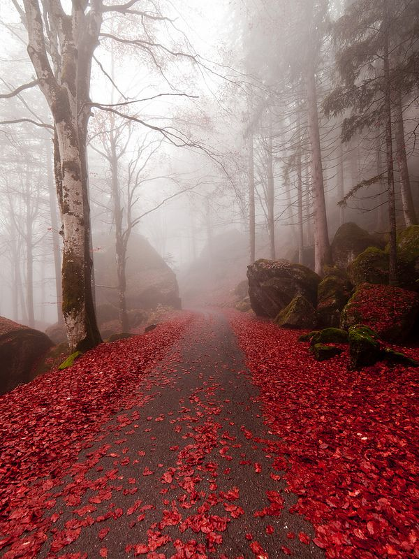 être éblouie par les merveilleuses couleurs naturelles