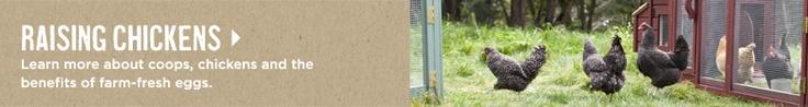Gallineros y Coops patio trasero de pollo | Williams-Sonoma