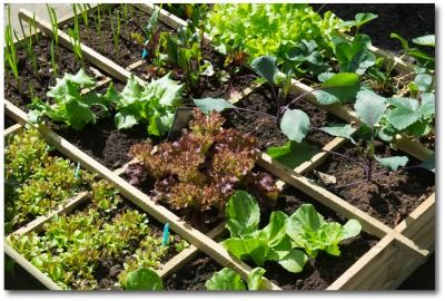 Planning a home vegetable garden layout is a great way to grow fresh vegetables for your family. Tips and ideas for a planting a container, French intensive or Hugelkultur vegetable garden.