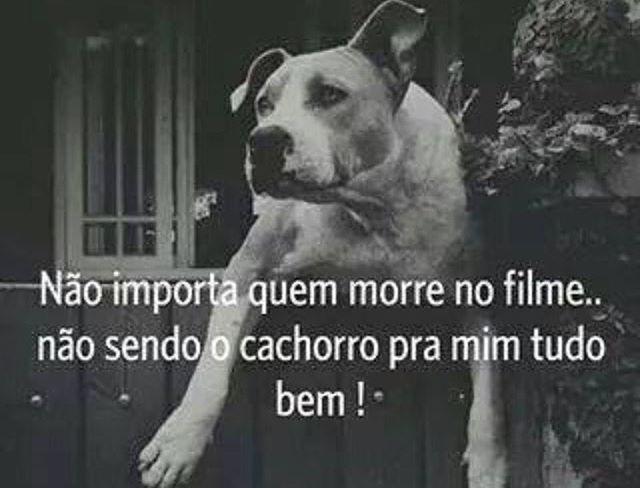 VERDADE! ❤️❤️ #petmeupet  #filhode4patas  #cachorroétudodebom  #cachorro  #amocachorro