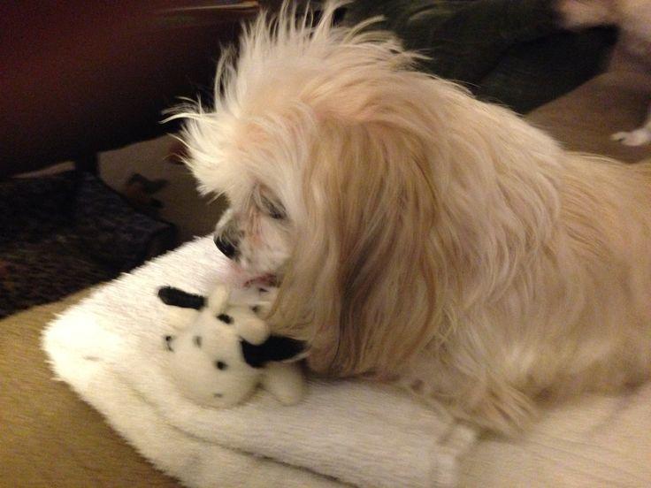 Dreidel demonstrates how to properly bathe a puppy.