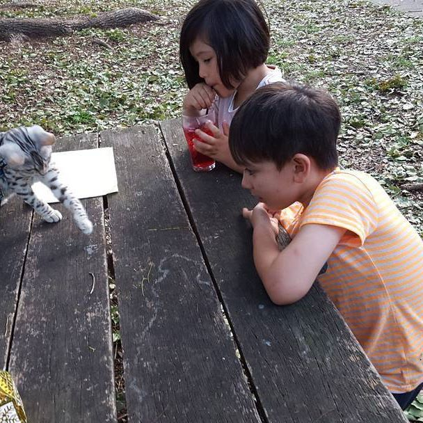 Sassy and the kids at camp. #bengalcat #cats  #catstagram #catsrequest  #catsitting  #bengals  #bengalsofinstagram  #catsdaily  #catlover  #catlady #cattitude #catslife #catsinstagram #catofinstagram #feline  #bengal #bengalkitten #catwalk #caturday #catsrule #cat #catsofig  #catlovers  #catslover #meow  #кот  #котэ #кошка #безкотаижизньнета   #catoftheday #catlovers #meow