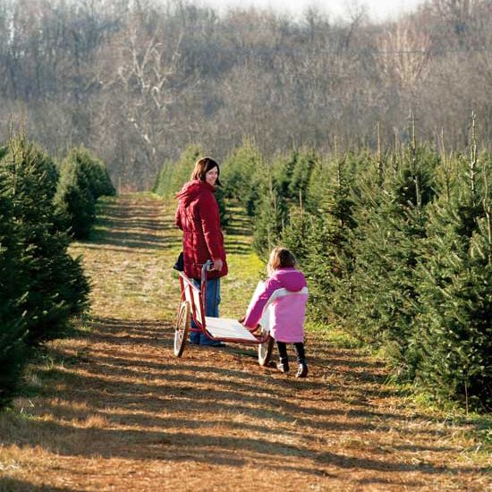 Home Based Business: Christmas Tree Farm