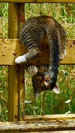 cat upside down on a fence