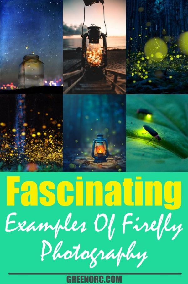 Here mentioned fascinating examples of firefly photography shows that how firefly photography manages to capture the luminescent quality of fireflies in