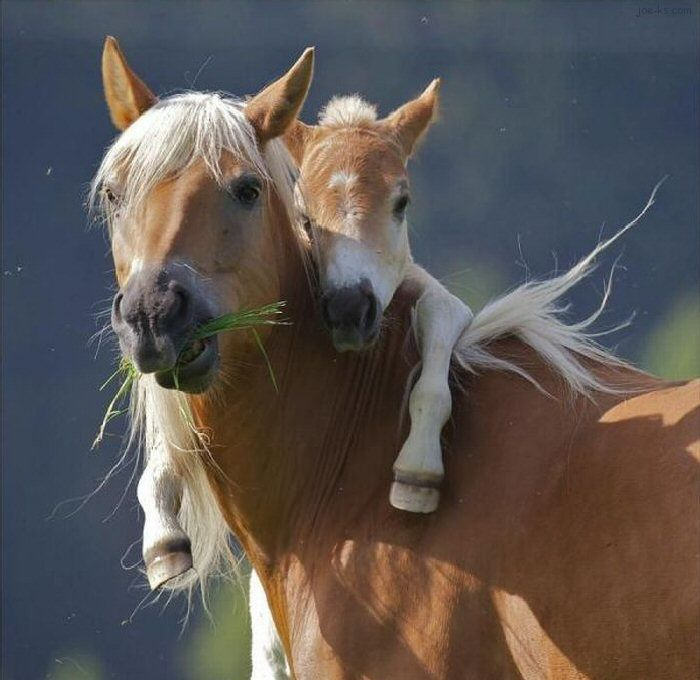 : Horseback Riding, Mothers Love, Cute Horses, Baby Horses, I Love You, So Cute, Baby Animal, So Sweet, Horses Love