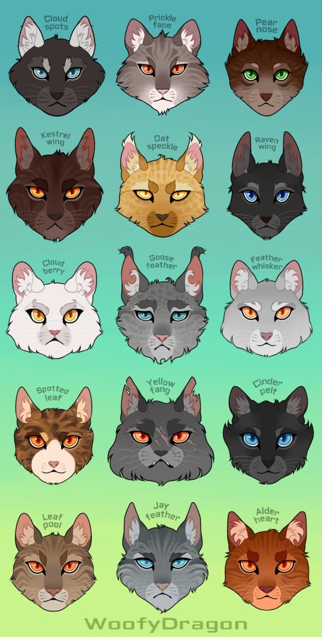 Thunderclan Medicine Cats by WoofyDragon Warrior cats