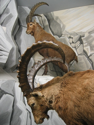 Capricorn is symbolized by the Goat. Picture that little mountain goat, always climbing to the top of the mountain -- that's Capricorn, ever ascending to the heights of their career. Capricorns are hard workers who feel a lifelong, inner need to impress others with their accomplishments and that healthy bank balance.