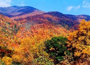 Fall In North Georgia Blue Ridge Mountains Extension Of Smoky Appalachian Mountain Range