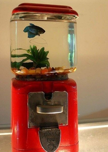 1000 images about fish bowls on pinterest pet for Legal fish bowl