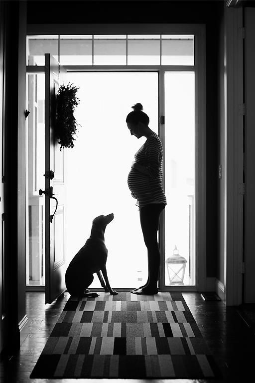 Awww... This would be such a cute pregnancy announcement for a first child. Buddy would look so cute doing this.  Especially if he stretched out to touch my belly.
