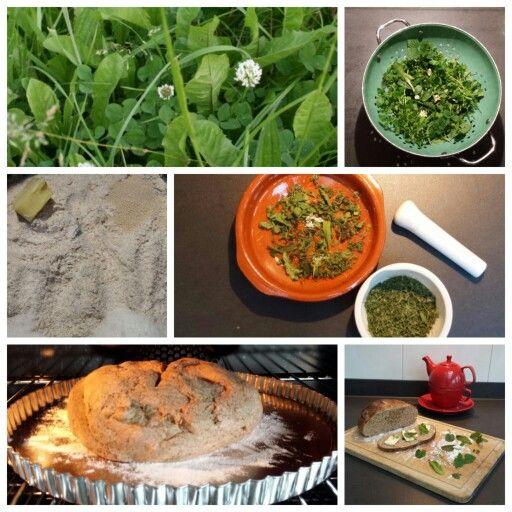 WILDE KRUIDENBOL Ingrediënten: - per bolletje 1 flinke handvol bladeren (bv. vogelmuur, winterpostelein, hondsdraf, madeliefje, brandnetel en paardenbloem) - broodmeel naar keuze Bereiding: Was de kruiden goed en laat ze zo lang drogen dat ze helemaal knisperig zijn. Maal ze nu met een vijzel zo fijn dat het poeder wordt. Voeg de kruidenpoeder toe aan broodmeel naar keuze en bak er brood van. (Zie ook de reactie hieronder.)