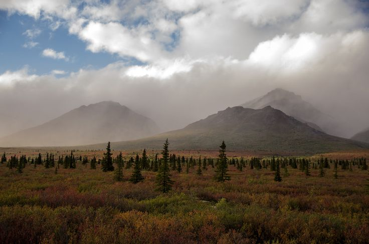 The tundra landscape of Denali National Park was awash with yellow and red hues when we visited in early September.