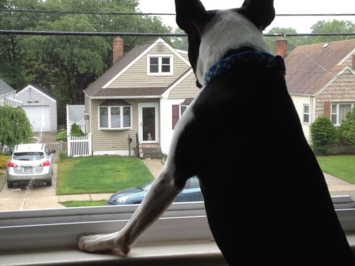 44 Best Worlds Smallest Dogs Images On Pinterest Little Dogs