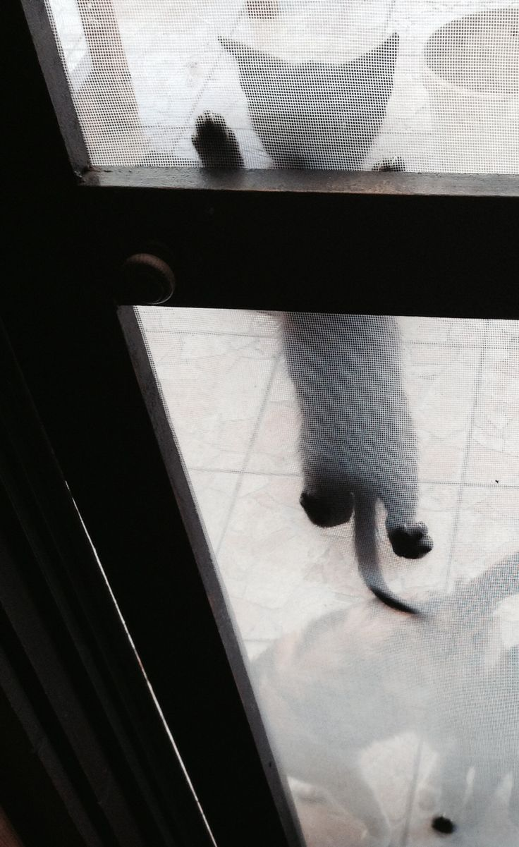 Please, let me in...