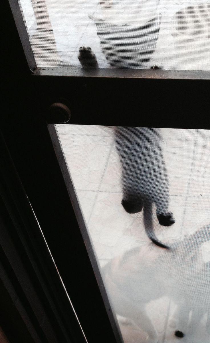 Please, let me in...