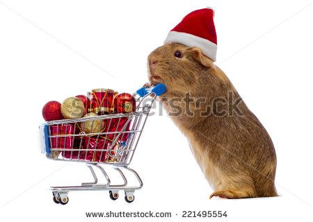 Guinea pig with christmas shopping cart - stock photo