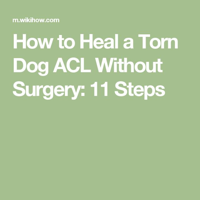 How to Heal a Torn Dog ACL Without Surgery: 11 Steps