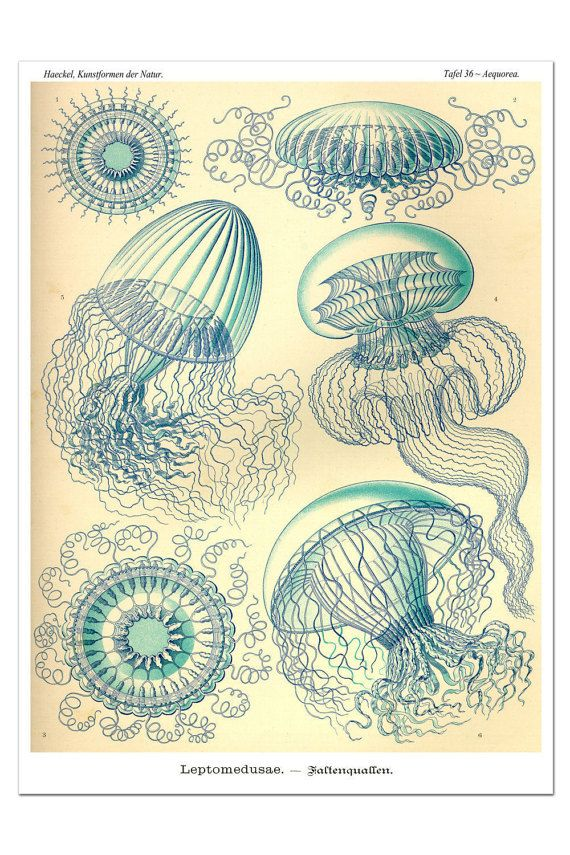 Jellyfish Print, Ethereal Blue Jellyfish Poster, Ernst Haeckel Print, Art Nouveau Wall Art, Coastal Art, Nautical Decor, Sea Life Print