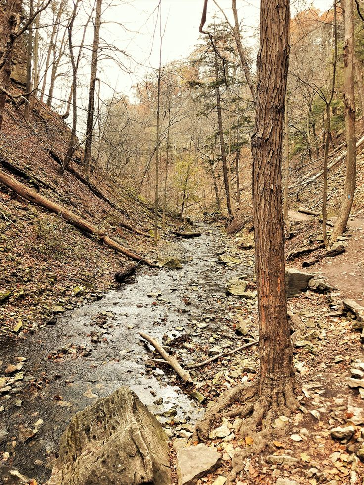 Along the creek, at Tiffany Falls, Hamilton