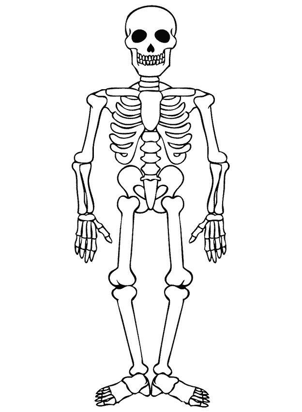 skelet kleurplaat | mijn lichaam | Pinterest | Van