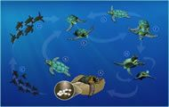 sea turtle info with interactive life cycle chart