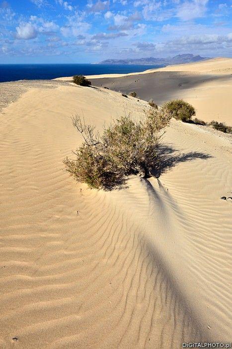 Nature, Fuerteventura