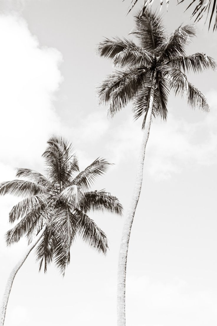 TITLE: Palm Trees No. 1. Original oversized black and white fine art photography print by Cattie Coyle Photography. SIZES: 10x15, 20x30, 40x60