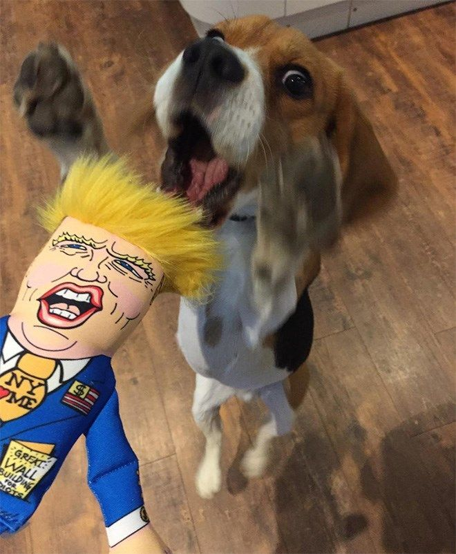 This Trump Chew Toy Is Becoming Popular And Dogs Love It Dog Toys Dog Supplies Dog Love