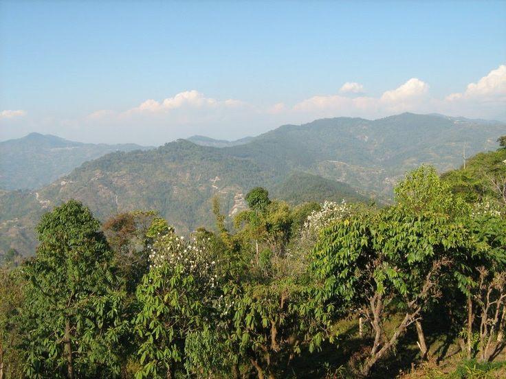 Marvellous Himalayan range & Greenery - Lava   Loleygaon , North Bengal
