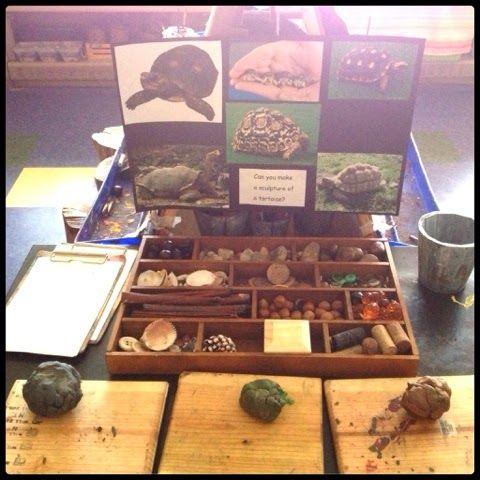 Inquiring Minds: Mrs. Myers' Kindergarten: Inquiring About Tortoises
