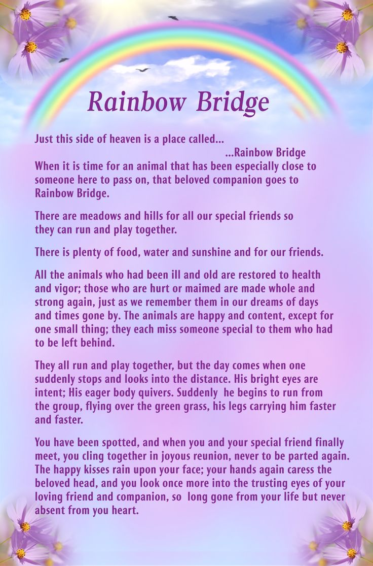 17 Best images about Dealing With Grief - Prayers Of Hope ... Rainbow Bridge