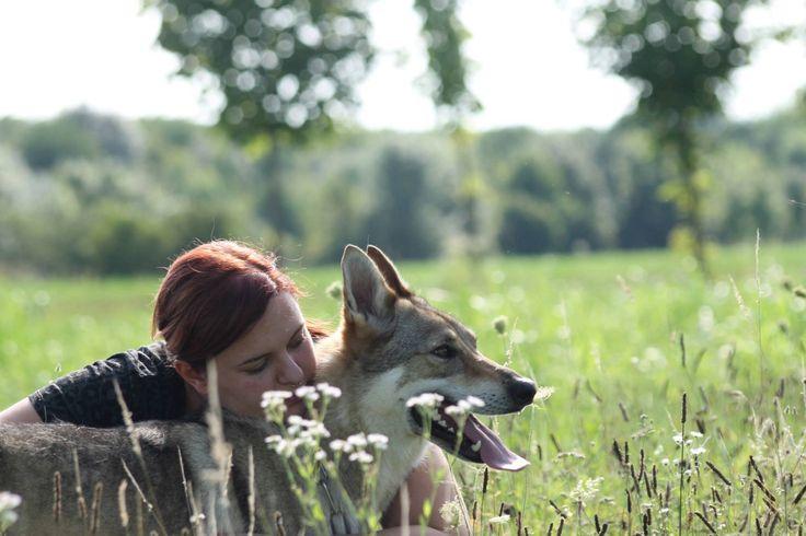 Kayla, czechoslovakian wolfdog