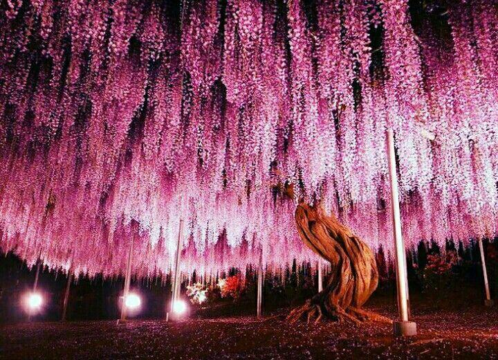 #belleza #perfecto #naturaleza