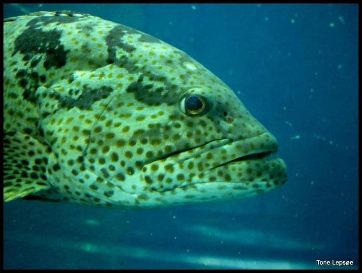 Fish – på Rayong Aquarium. Thailand. TONE LEPSØES PICTURES