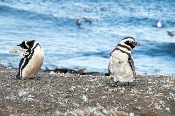 34 Animales En Peligro De Extinción En Argentina Fotos Animales En Peligro De Extincion En Peligro De Extincion Animales