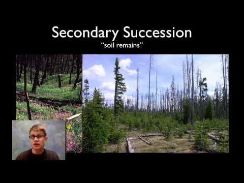 Ecological Succession - YouTube