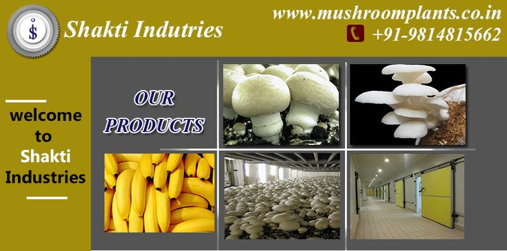 SHAKTI INDUSTRIES specialises in complete Turn-key Industrial Refrigeration for Mushroom growing Projects from Concept to Commissioning including Design, Manufacture, Resource, Supply, Installation, Commissioning, Testing and Training to enduser.