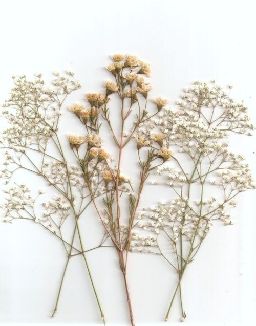 dried flowers via Modern Hepburn