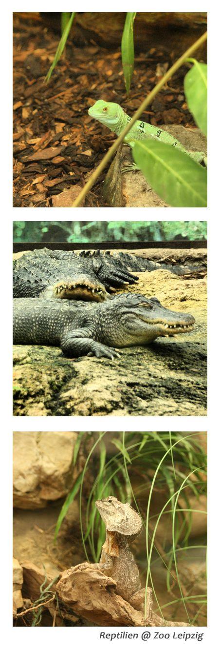 Die Entstehung des Lebens begreifen im Leipziger Zoo #Reptilien #Leipzig #Ausflug