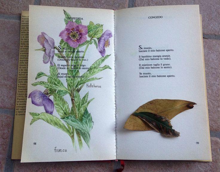 Home - franca cecchinato, watercolours, botanical art, hellebore, helleborus, elleboro, acquerelli botanici,