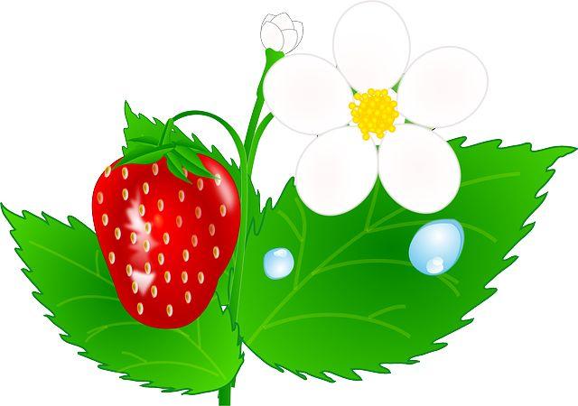 цветок клубники - Cerca con Google