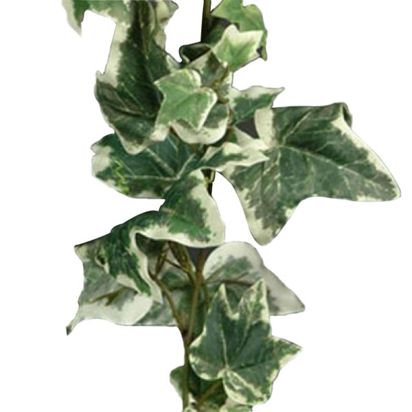 180cm £3.95 Artificial Holland Ivy Garland