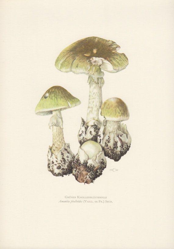 1961 Death Cap Mushroom Antique Botanical Print by Craftissimo