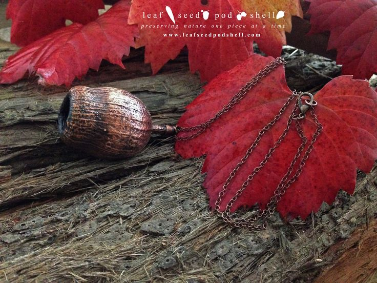 This is a beautiful rustic Australian native gum nut preserved in an antique copper finish. #leafseedpodshell #leafseedpodshelljewelry #leaves #gumleaf #seeds #pods #shells #copper #electroform #electroforming #electroformed #electroplated #electroplating #nature #natural #rustic #plating #jewelry #jewellery #pendant #pendants #handmade #handmadejewelry