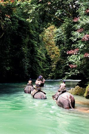 "Go on a three hour elephant trek in the National Park after talking to jungle patrol, bathing elephants, and enjoying the ""hidden paradise"" of Tangkahan, Indonesia."