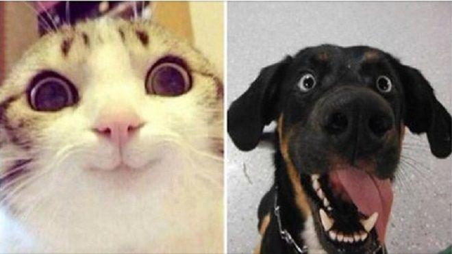 Biliyor muydun ? /// İşte Norveç Hayvan Hakları: Kedi Evde Yalnız Bırakılmayacak, Köpek Günde 3 Kez Gezdirilecek