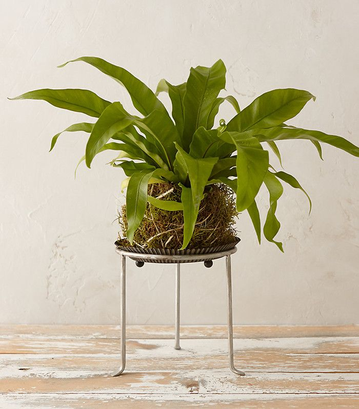 Weu0027re rounding up the best indoor plants